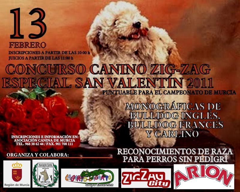 Concurso Canino