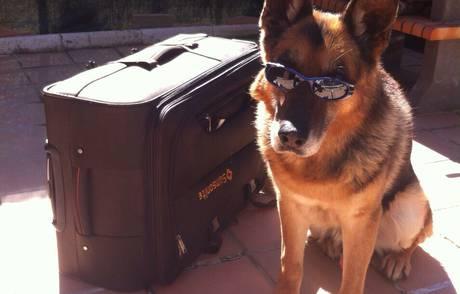 Una segunda oportunidad para los perros de la Policía