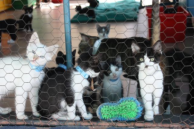 La Protectora de Animales quiere concienciar a los jacetanos