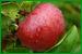 Proceso de la fruta